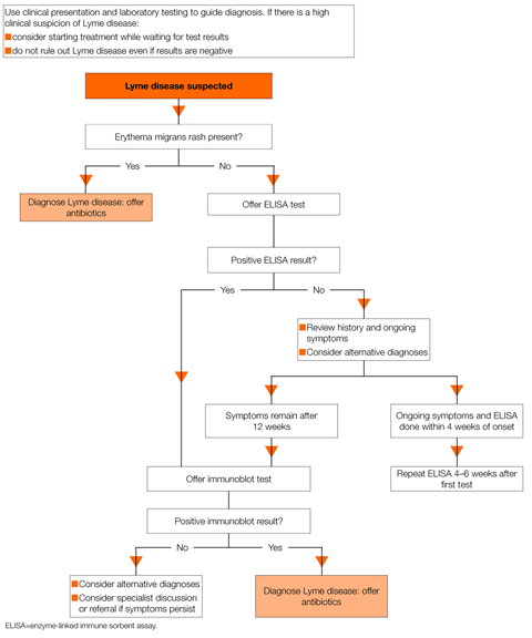 Flowchart on lyme disease laboratory investigations and diagnosis 1280x1536