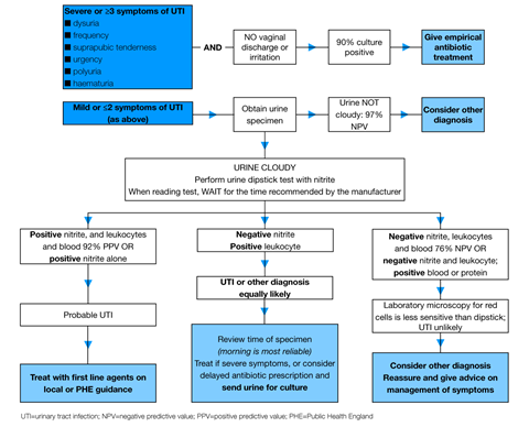 Algorithm for the assessment of urinary symptoms in women (65 years of age 1280x1036