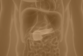 Outline-of-organs-with-pancreas-in-red_AS